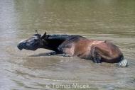HORSES_2_118
