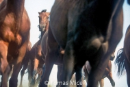 HORSES_2_119