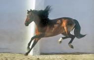 HORSES_2_120