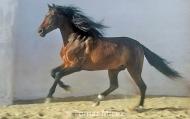 HORSES_2_121