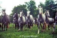HORSES_2_124