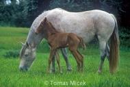 HORSES_2_125