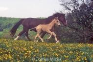 HORSES_2_126