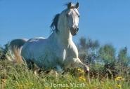 HORSES_2_129