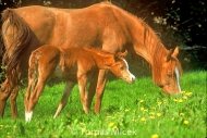 HORSES_2_130