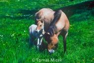 HORSES_2_132