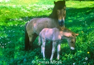 HORSES_2_133