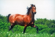 HORSES_2_134