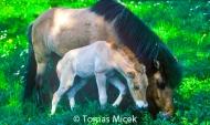 HORSES_2_135