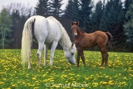 HORSES_2_136