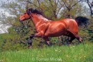 HORSES_2_137