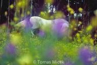 HORSES_2_138