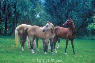 HORSES_2_139