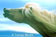 HORSES_2_140