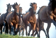 HORSES_2_141