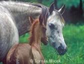 HORSES_2_142