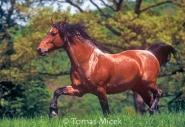 HORSES_2_144