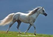 HORSES_2_145