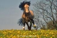 HORSES_2_147