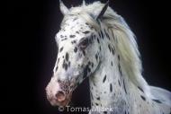 HORSES_2_148