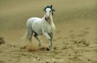HORSES_2_149