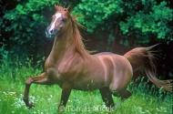 HORSES_2_150