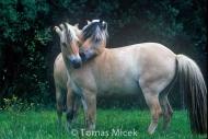 HORSES_2_152