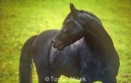 HORSES_2_153