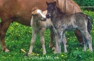 HORSES_2_154