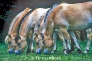 HORSES_2_155