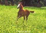 HORSES_2_156