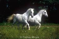 HORSES_2_158