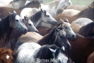 HORSES_2_159