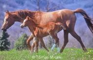 HORSES_2_160