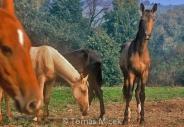 HORSES_2_161