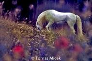 HORSES_2_162