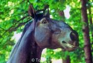HORSES_2_163
