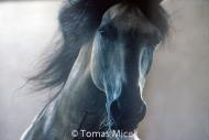 HORSES_2_164