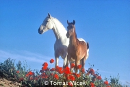 HORSES_2_165