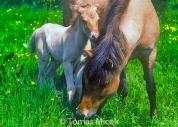 HORSES_2_166