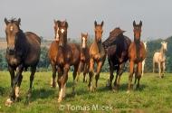 HORSES_2_169