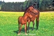HORSES_2_170