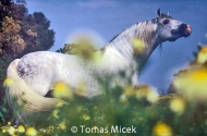 HORSES_2_172