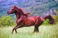 HORSES_2_173