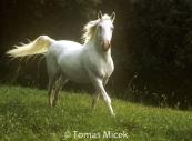 HORSES_2_174