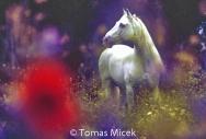 HORSES_2_175