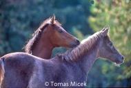 HORSES_2_176