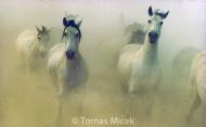 HORSES_2_177