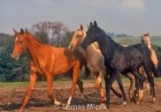 HORSES_2_178