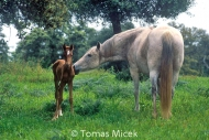 HORSES_2_179